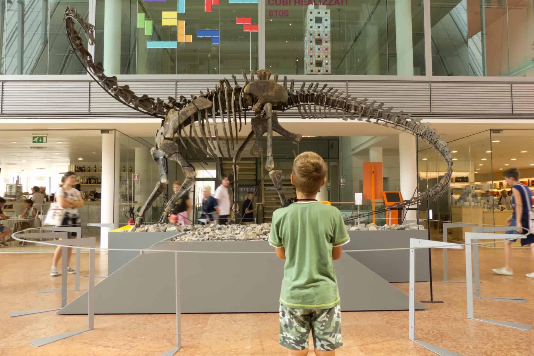 rapaz a olhar para esqueleto de dinossauro no museu