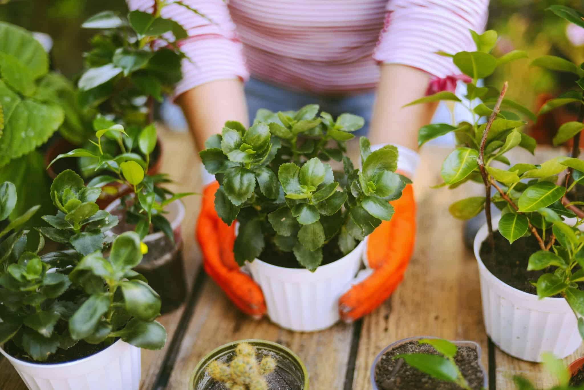 mulher a fazer jardinagem a cuidar dos vasos