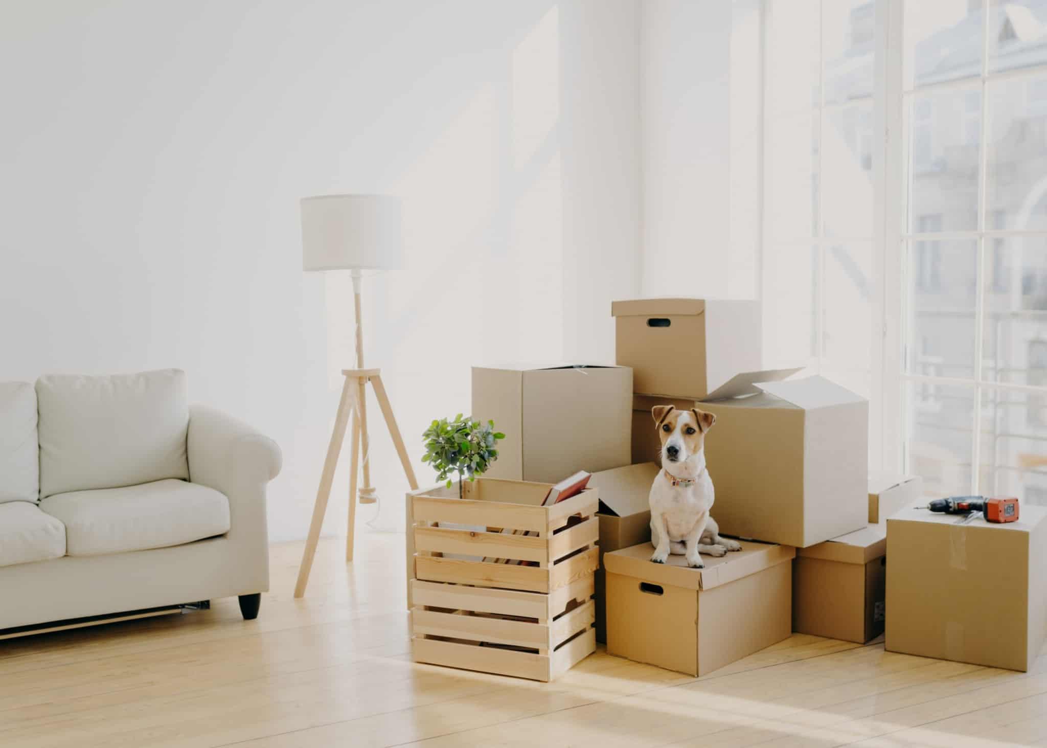 Imagem de uma sala onde se pode ver caixas - comprar casa - mudanças - sair de casa